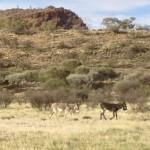 Lebensraum Australien