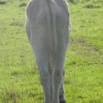 Esel zu dünn